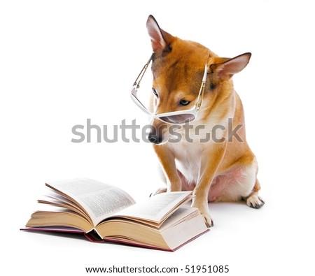 dog isolated on white background - stock photo