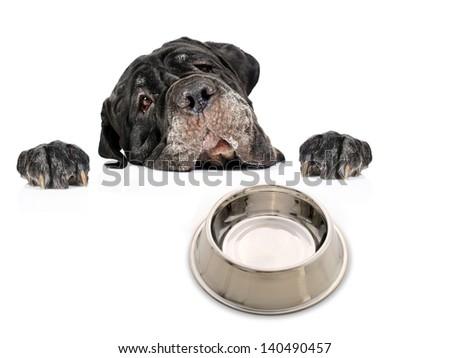 Dog isolated over white background. - stock photo