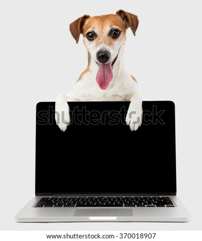 Dog jack russell terrier with computer. Office worker classified information. Website ad Templates. Copyspace for your site page - stock photo