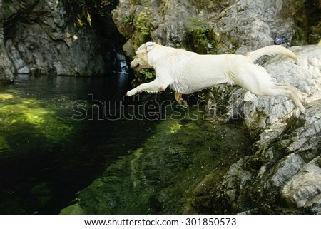 dog jumping into clear green river pool - stock photo
