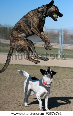 Dog jumping through the air to catch his ball - stock photo