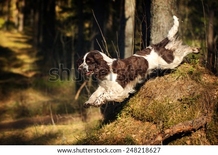 Dog jumps down in the woods - stock photo