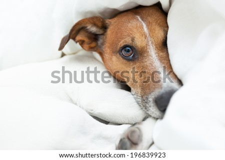 dog just woke up from a beautiful dream - stock photo
