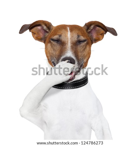 dog laughing at a very funny  joke - stock photo