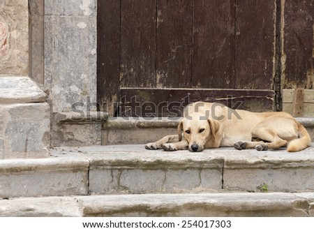 Dog laying on stairs of church - stock photo