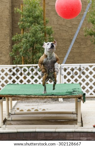 Dog leaping off the dock straight up for a big ball - stock photo