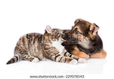 dog licking cat. isolated on white background - stock photo