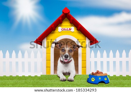 dog living in his own colourful home sweet home - stock photo