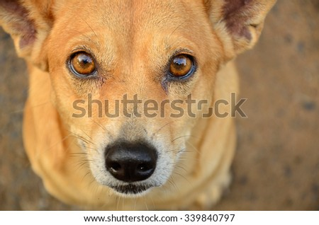 dog looking  - stock photo
