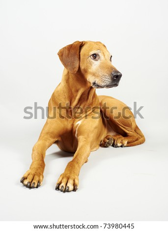 Dog looking on free copyspace - stock photo
