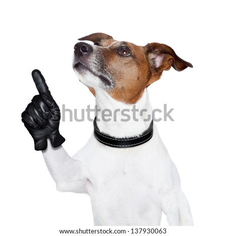dog looking up and pointing up to something - stock photo