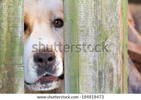 Dog looks through fence - stock photo