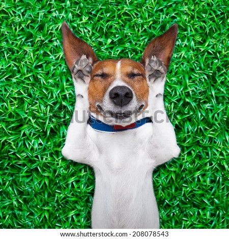 dog lying on grass with silly crazy dumb expression on face - stock photo