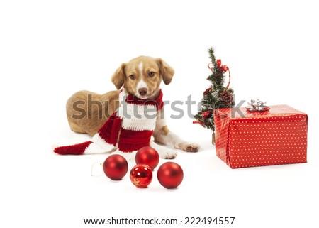 Dog lying with christmas presents. - stock photo