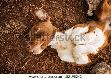 dog - man's best friend - stock photo