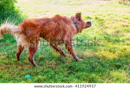 dog mix shaking off water after swimming - stock photo