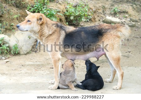 Dog Mother Stand Feeding the 2 cute puppies - stock photo