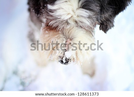 Dog nose with snow - stock photo
