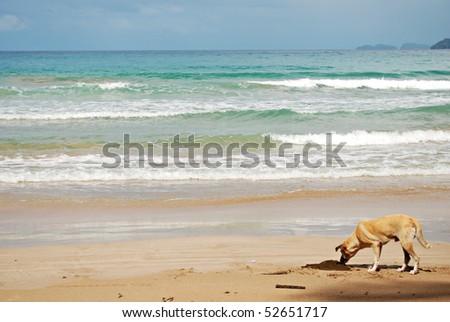Dog on a Beach - stock photo