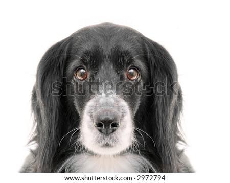 dog on a white background - stock photo