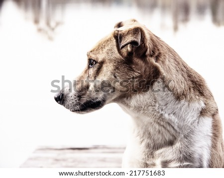 dog on autumn lake experimental look - stock photo