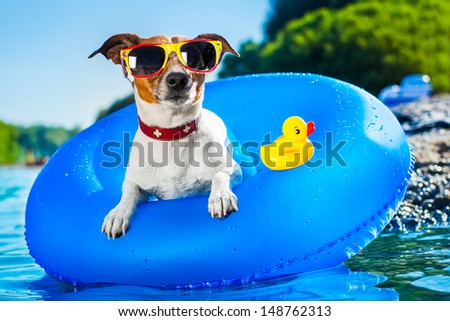 dog on  blue air mattress  in refreshing  water - stock photo