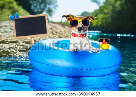 dog on  blue air mattress  in water refreshing on summer vacation holidays at the beach or river, blackboard  - stock photo
