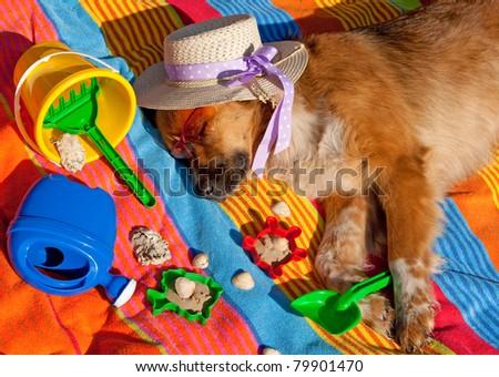 dog on holidays - stock photo