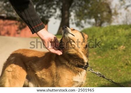 dog on line - stock photo