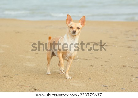 Dog on the beach near the sea or ocean water. Walking the dog near the water. Together with his dog to go on vacation and do the walk. Beach, sea, animals, dog, ocean, fresh air - concept of lifestyle - stock photo