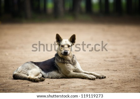 dog on the field - stock photo