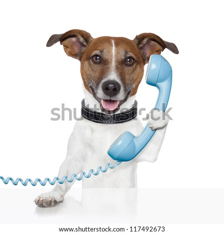 dog on the phone talking and calling - stock photo