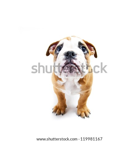 Dog on the whte background - stock photo