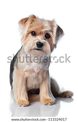 Dog on white - stock photo