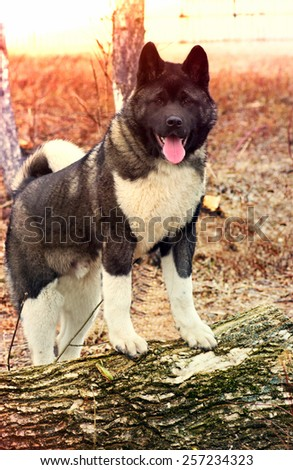 dog outdoors - stock photo