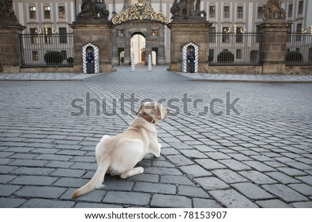 Dog patiently waiting in front of the honor guard of Prague Castle, Czech Republic. - stock photo