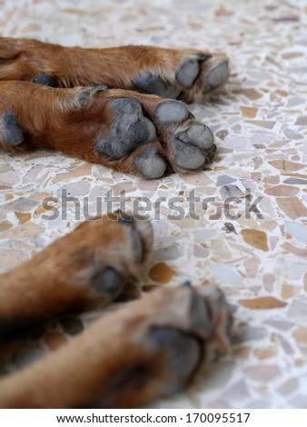 dog paw - stock photo