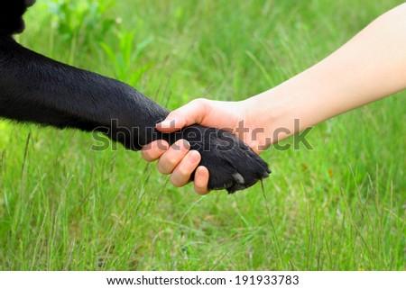 dog paw child's hand friendship - stock photo