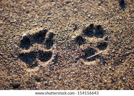 Dog paw on sand - stock photo