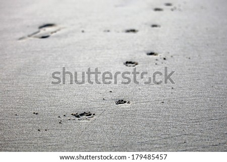 Dog paw prints isolated - stock photo
