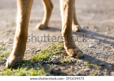 Dog paws on the nature - stock photo