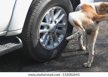 Dog pee on wheels. - stock photo
