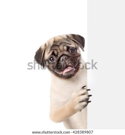 Dog peeking from behind empty board. isolated on white background - stock photo