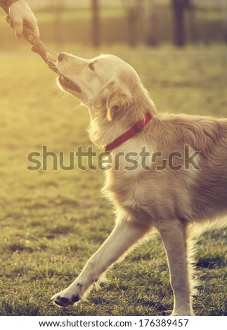 Dog playing in the park - stock photo