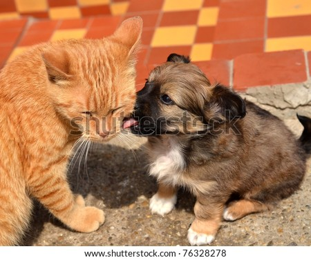dog playing with cat - stock photo