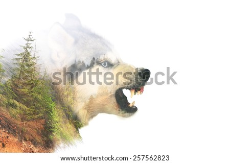 Dog portrait. Double exposure - stock photo