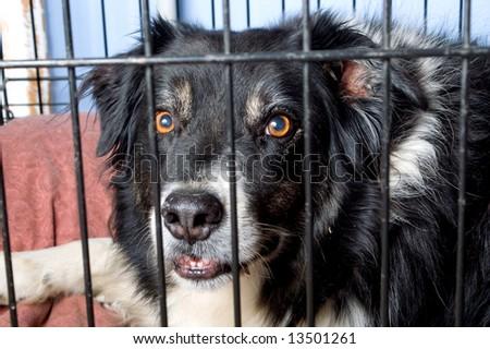 Dog Pound - stock photo