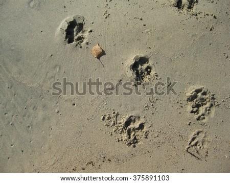 Dog prints across the sand - stock photo