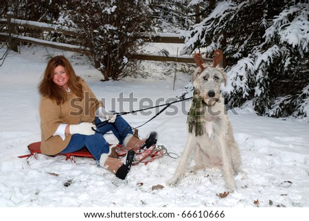 dog pulling owner on sled - stock photo