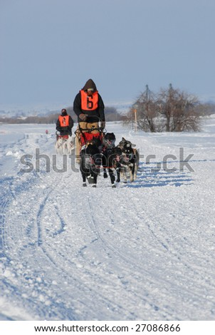 Dog race - stock photo